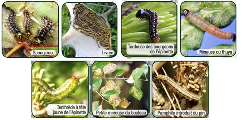 Insecte-traitement-TreeAzin