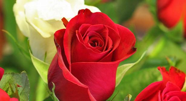 Des Fleurs Mon Amour?