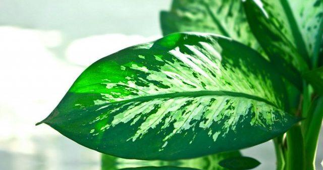 Entrer Les Plantes D'intérieur à L'automne
