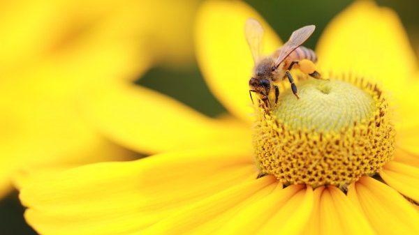 Les Insectes Dans Le Jardin