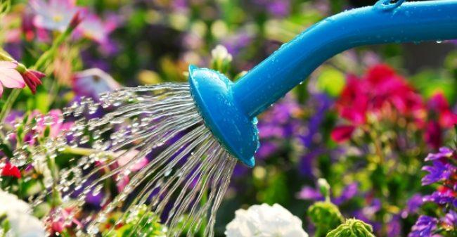 Arrosage: L'eau C'est La Vie