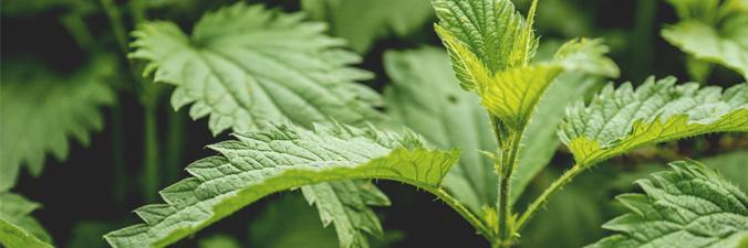 Les Fines Herbes Au Jardin